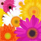 Světlé květy