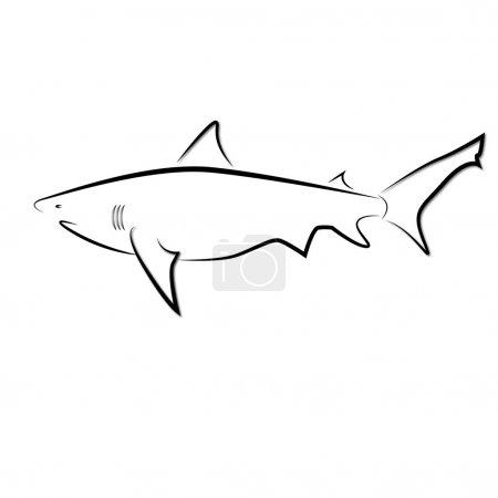 The vector image of a shark