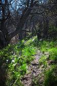 Footpath in old garden