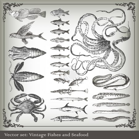 Illustration for Vector set: fish background for poster - Royalty Free Image