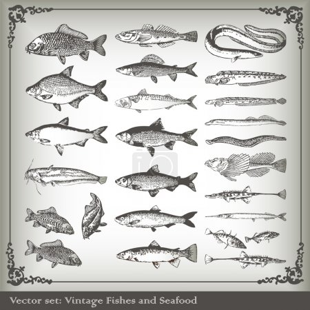 Vector set: fish background