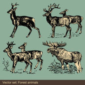 Forest animal vectors