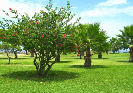 Park in Miraflores, Lima, Peru