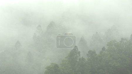 Photo pour Brume en montagne avec de nombreux arbres - image libre de droit