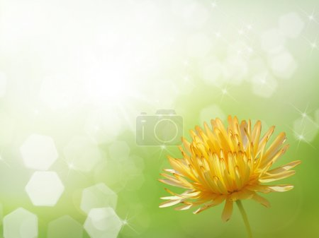 Bokeh blur flower