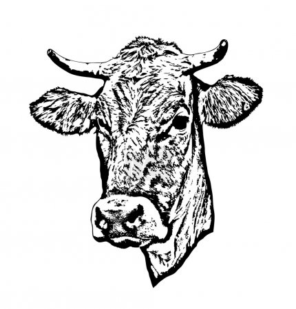 Illustration pour Silhouette de tête de vache . - image libre de droit