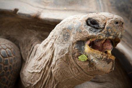 Vegetarian Tortoise