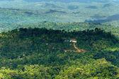 Amazonian Jungle