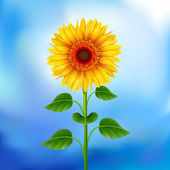 Yellow sunflower on the blue background Mesh