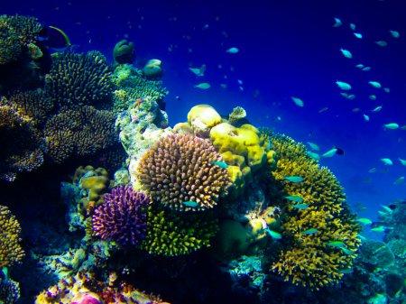 Photo pour Monde sous-marin aux Maldives mer bleu clair - image libre de droit