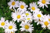 Krásná kytice