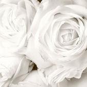 "Постер, картина, фотообои ""Белые розы"""