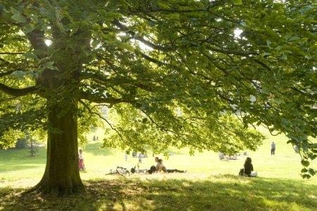 Photo pour Dans le parc - image libre de droit