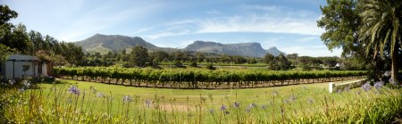 Wine estate in Cape Town