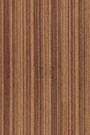 Photo pour Texture de noyer (série de textures de bois très détaillées) ) - image libre de droit