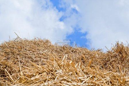 Photo pour Balles Haystacks à la campagne, vue sur la campagne . - image libre de droit