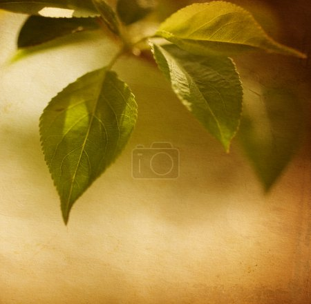 Grunge image of spring foliage