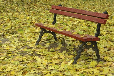 Bench among the fallen leaves