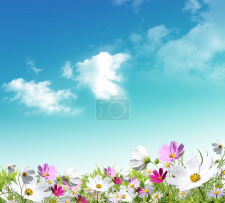 Photo for Nice spring situation for your design on sky background - Royalty Free Image