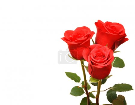 Red fresh roses