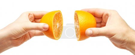 Photo for Two hands and orange fruit on white - Royalty Free Image