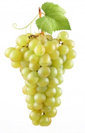 Photo pour Grappe de raisins mûrs sur fond blanc - image libre de droit