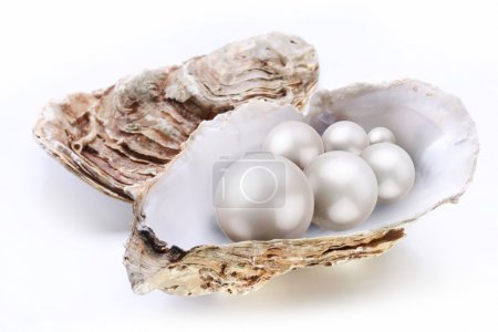 Image placer pearls in a shell on a white background.