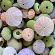 Colorful collection of sea urchin shells with a va...
