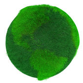 Zelená země, porostlý trávou