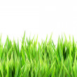 Wet green grass, isolated on white background...