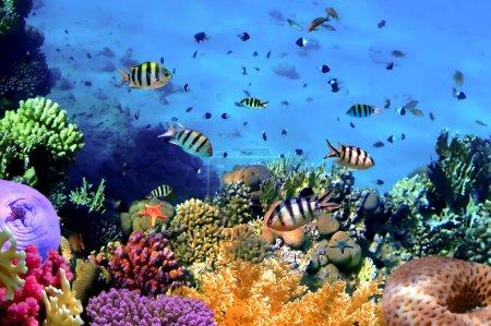 Photo pour Photo d'une colonie de corail sur un récif, île de Koh Cahg, Thaïlande - image libre de droit