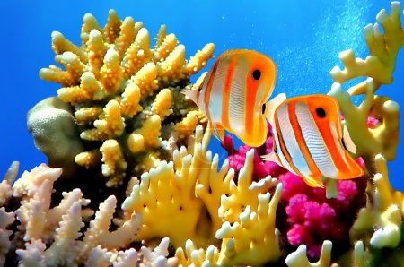 Coral reef and Copperband butterflyfish