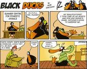 Black Ducks Comics episode 51
