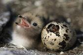 Just hatching baby bird.