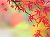 Japanese maple in autumn colors EPS 8 vector file included