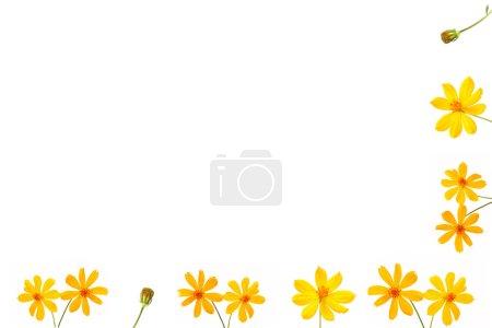 Yellow flower fram