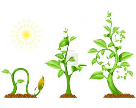 Illustration for Three phases of plant growth, vector image - Royalty Free Image