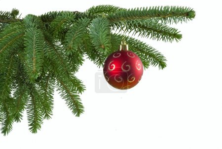 Photo for Red Christmas ball on green spruce branch - isolated - Royalty Free Image
