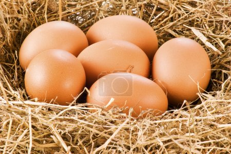 Photo for Fresh farm eggs in hay - close up - Royalty Free Image
