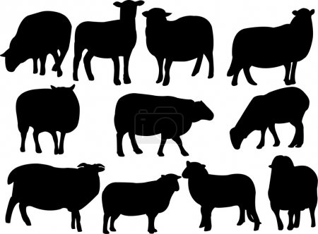 Illustration for Sheep collection - vector - Royalty Free Image