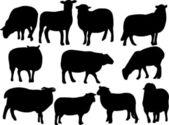Sheep collection - vector