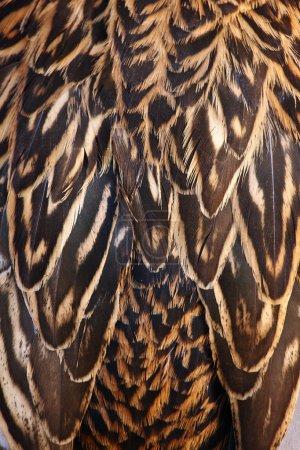 Photo pour Une photo de la plume de canard beau fond naturel - image libre de droit