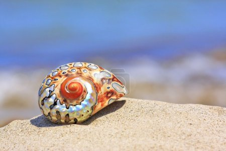 Photo for Colorful shell on sandy tropical beach - Royalty Free Image