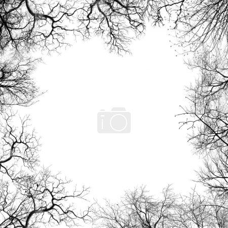 Photo pour Branches de l'arbre - image libre de droit