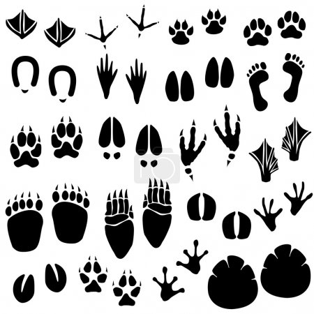 Animal Footprint Track Vector