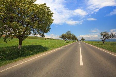 Photo pour Route de campagne droites avec des arbres sur le côté, l'été - image libre de droit
