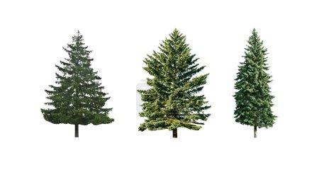 Photo pour Trois pins est isolé sur fond blanc - image libre de droit