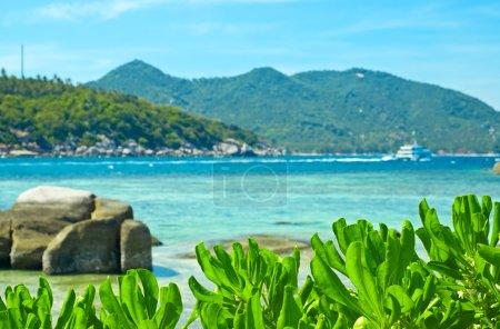 Photo pour Belle plage tropicale avec des plantes . - image libre de droit