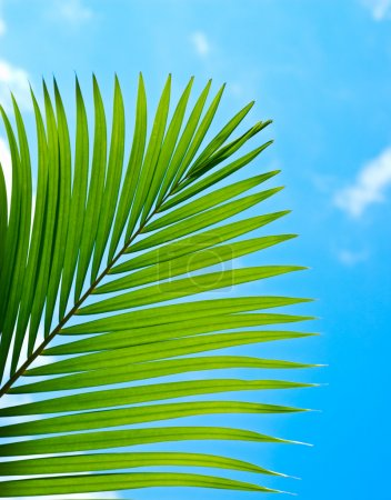 Photo for Palmtree branch on cloudy sky. - Royalty Free Image