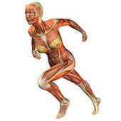 žena sval běží